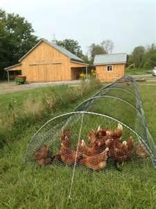 Raising Quail In Your Backyard 25 Best Ideas About Chicken Runs On Pinterest Chicken