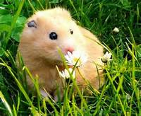 Funny Cute Hamster  Interesting Pictures And