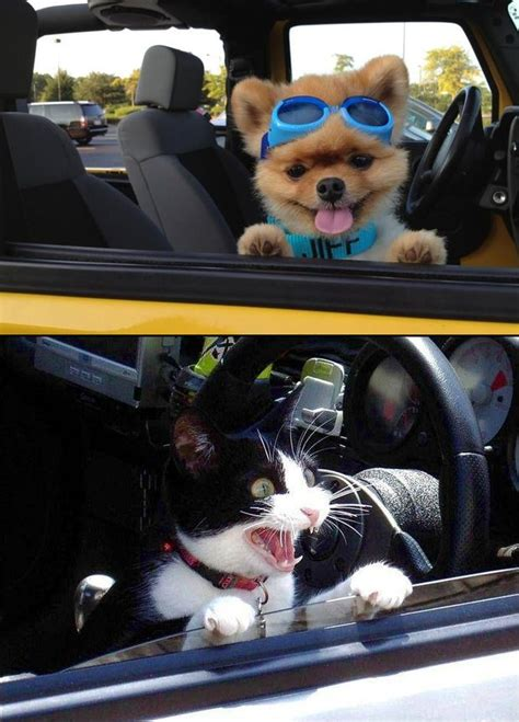 Dog In Car Meme - the difference between cats and dogs 10 spot on