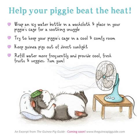 will a heat l keep a dog warm 48 best images about guinea pig care on pinterest water