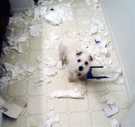 puppy toilet paper in the act