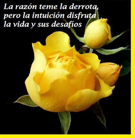 imagenes con rosas y frases bonitas imagenes de rosas con frases bellas para conquistar