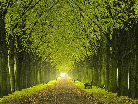 preview beautiful trees wallpaper