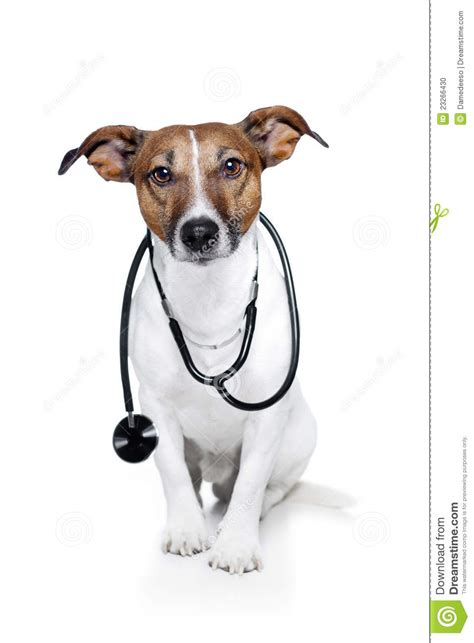puppy doctor as doctor stock photo image 23266430