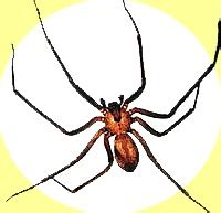 violin pattern on brown recluse 17 best images about wild outdoors on pinterest deer
