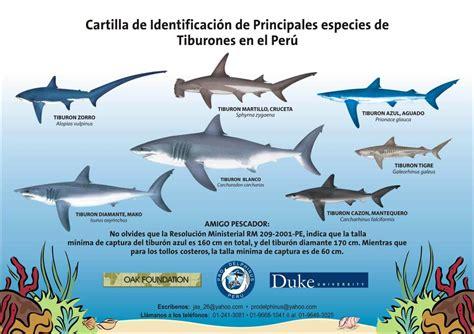 cuantas clases de cadenas carbonadas hay tipos de tiburones este blog se trata sobre los tipos de