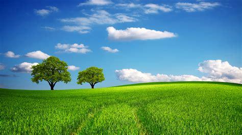 tree field green oak hill horizon sky spring summer lawn