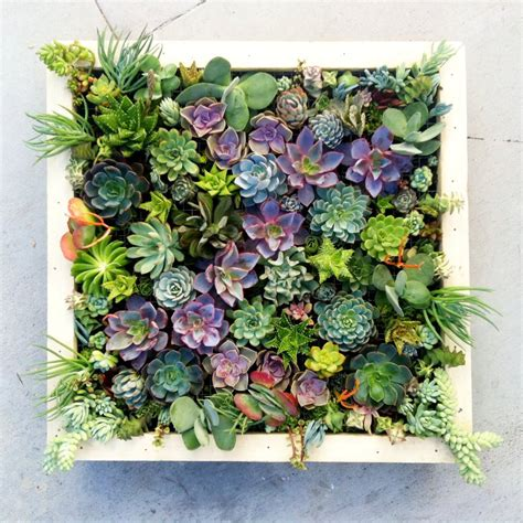 Vertical Succulent Planter by Vertical Succulent Wall Made To Order