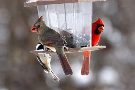 providing food for birds in the winter backyard birds