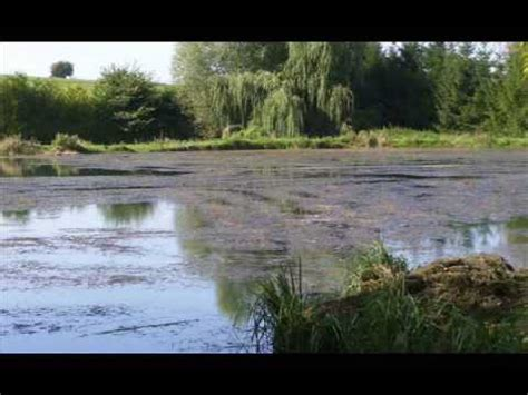 My Toxic Baby Documentary Watch by 2 4 D Herbicide Death To Weeds 1947 Dow Chemical