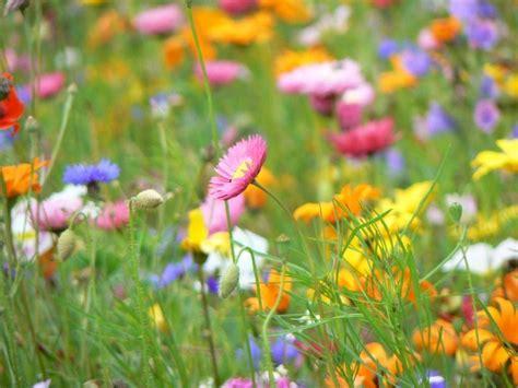 sognare fiori colorati voglia di fiori sfumature verdi