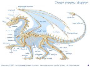 drachen le physiology here be dragons draconian