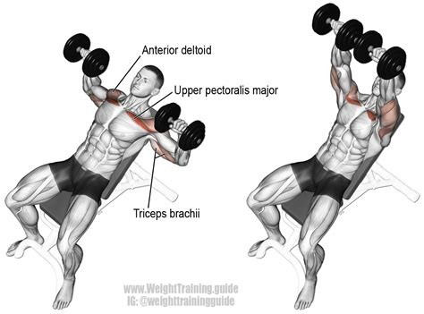 bench press with dumbbell incline dumbbell bench press instructions and video