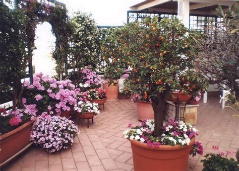 terrazze fiorite foto pensiline in vetro pergole e tettoie da giardino