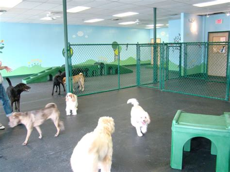 arlington dog house home www arlingtondoghouse com