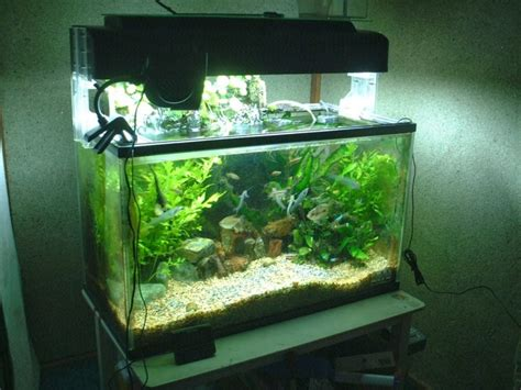 Handmade Aquarium - top 10 diy aquarium ideas for your next aquarium project