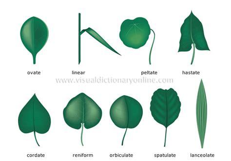 einfache le plants gardening plants leaf simple leaves