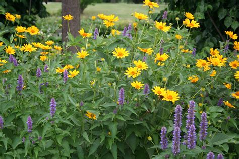 Identifying Trees By Their Flowers - summer plants grow different colors and sizes of salvia