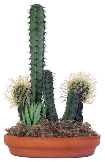 pianta grassa appartamento piante grasse le cactacee fai da te in giardino