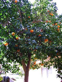 life cycle   orange tree homeschool