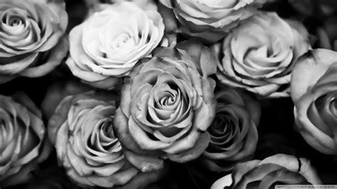 black rose wallpaper  hd wallpaper hdflowerwallpapercom