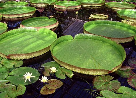 pond l shades the benefits of a koi water garden koi
