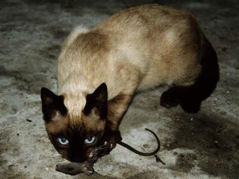 imagenes uñas gatos fotografias de gatos