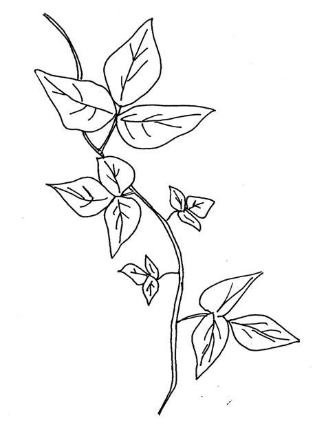 Vine Leaf Coloring Page | ivy vines leaf coloring pages sketch coloring page vine