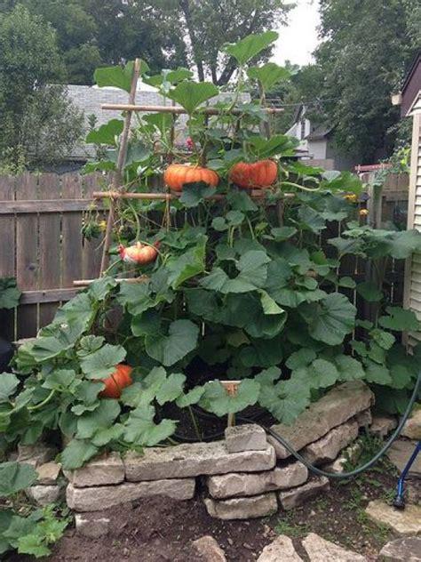 creative diy ideas  support climbing vegetables plants