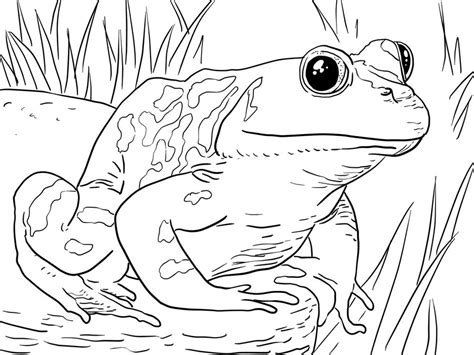 coloring page frog on a log disegni da colorare rane stabile gratuito per