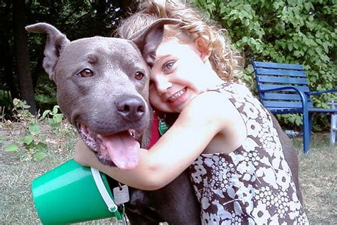 Do Pitbulls Shed by Pit Bulls Breeds Picture