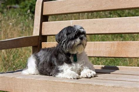 mascotas para un piso perros para tener en un piso peque 241 o