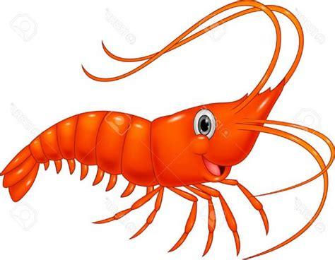 shrimp clip shrimp clipart cliparts