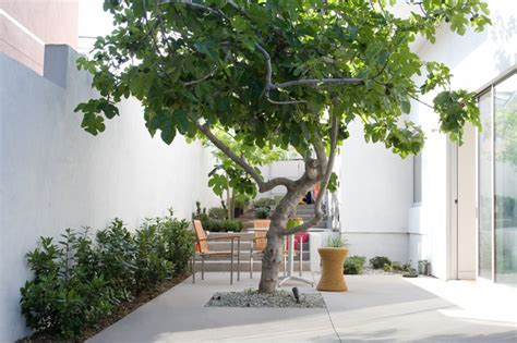 terrific trees   courtyard