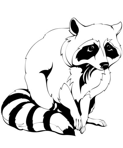 raccoon coloring page raccoon coloring page free printable coloring pages
