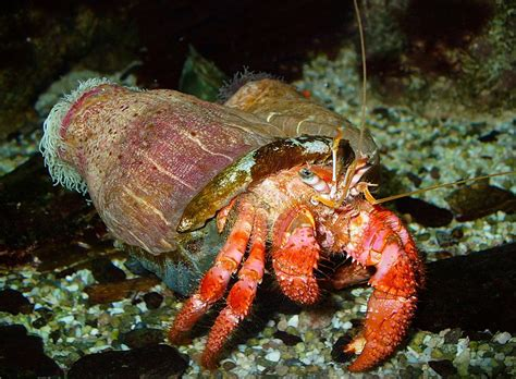 colorful crab abcs of animal world the most beautiful and distinctively
