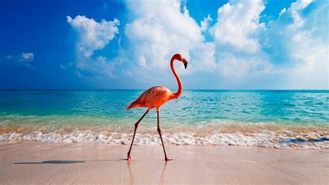imagenes 4k que es descargar fondos de pantalla flamencos mar verano aves
