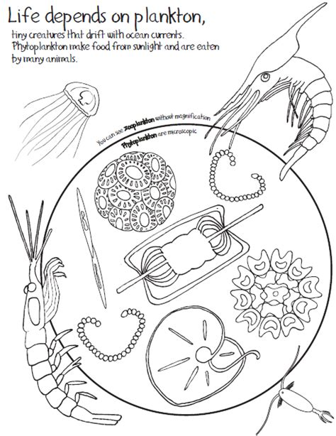 zooplankton coloring pages zooplankton coloring page coloring pages