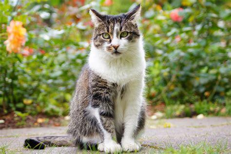 repousser le chat des voisins la pause jardin