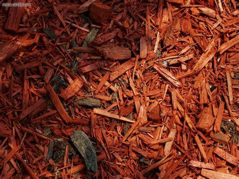 development toronto roncesvalles wood chip mulch picture