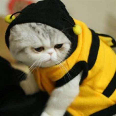 tokopedia hewan game mainan kucing dhian toys