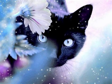 cute cat wallpaper zedge download magic cat wallpapers to your cell phone black