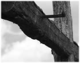 the message of the crucified and its bold claim