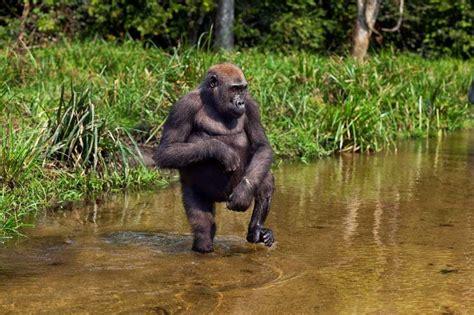 Cross River Gorilla Habitat | www.imgkid.com - The Image ...