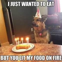 Birthday Meme Dog - best 25 happy birthday dog meme ideas on pinterest