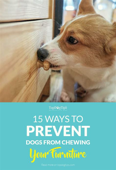 how to keep puppies from chewing on furniture 15 ways to prevent dogs from chewing furniture and belongings