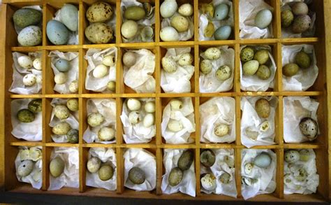 Egg Collection The Most Beautiful Eggs Right Now Food Drink Eggs
