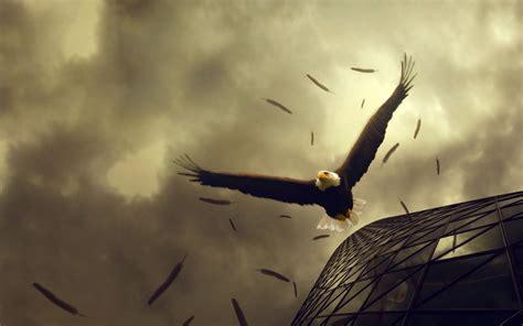 imagenes biblicas reales foto aguila americana volando calidad alta 1920 1200