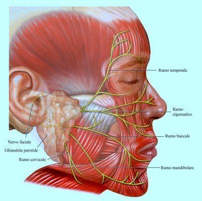 mal di testa e pressione alta ipertensione arteriosa o pressione alta sintomi e dieta