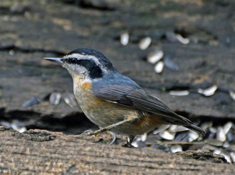 indiana dunes birding documenting bird migration in the